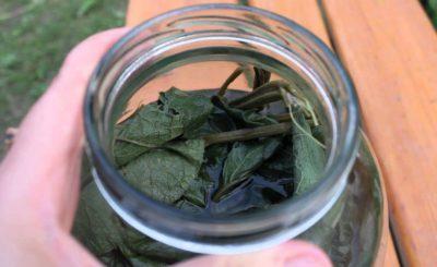 Настой из листьев лопуха