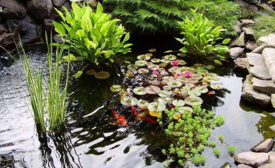 Растения для украшения прудика