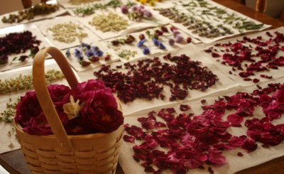 Сушка цветов